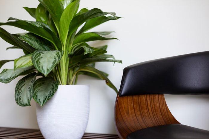 گیاه تصفیه کننده هوا
